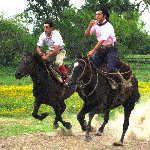 Gaucho Party - Day In A Farm Tour